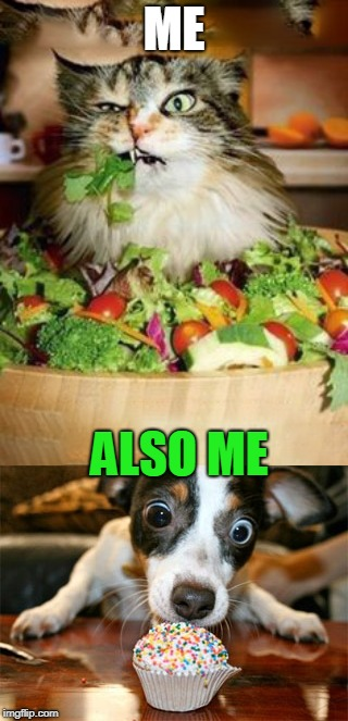 ME ALSO ME | image tagged in salad-cat,dog eating cake | made w/ Imgflip meme maker