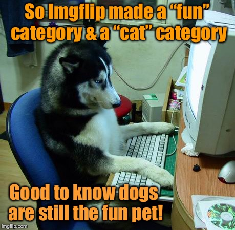 "This is fun, so it shall not be posted under ""cats"" 