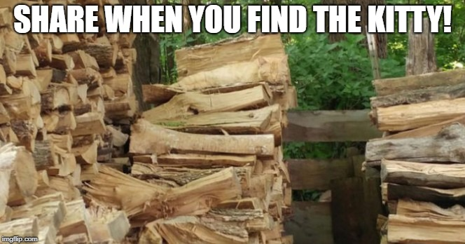 Find the kitty | SHARE WHEN YOU FIND THE KITTY! | image tagged in search,eyes,cat,kitty | made w/ Imgflip meme maker