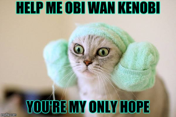 Help me obi wan | HELP ME OBI WAN KENOBI YOU'RE MY ONLY HOPE | image tagged in star wars kitty,funny star wars | made w/ Imgflip meme maker