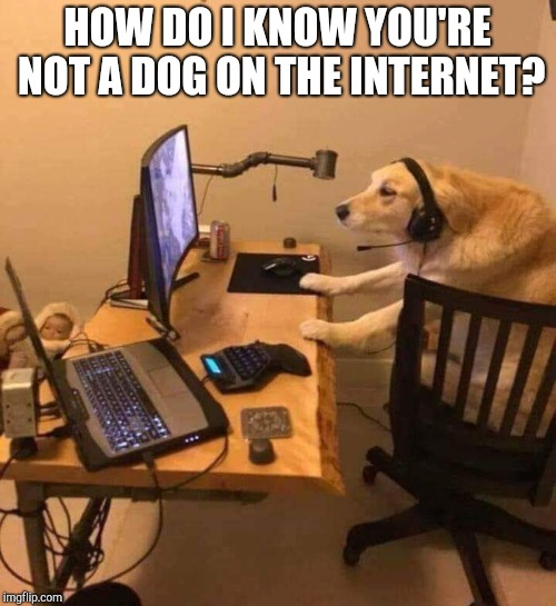 HOW DO I KNOW YOU'RE NOT A DOG ON THE INTERNET? | image tagged in dog on the internet | made w/ Imgflip meme maker