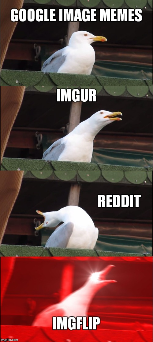 Bird On Crack | GOOGLE IMAGE MEMES IMGUR REDDIT IMGFLIP | image tagged in memes,inhaling seagull,funny,pewdiepie,oof,thecrappymeme | made w/ Imgflip meme maker