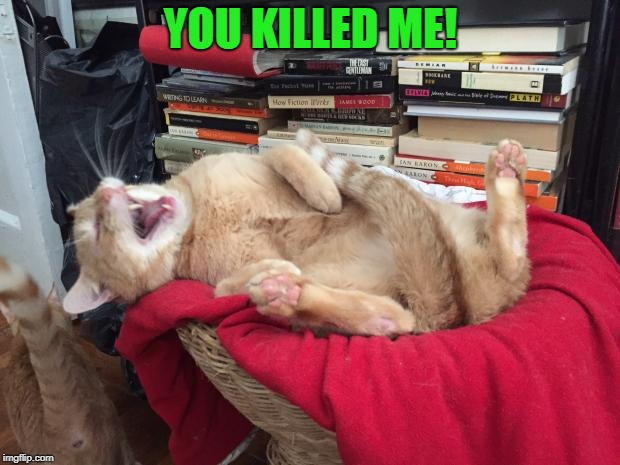 Cat Laughs | YOU KILLED ME! | image tagged in cat laughs | made w/ Imgflip meme maker