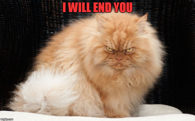 Angry Cat | I WILL END YOU | image tagged in angry cat | made w/ Imgflip meme maker