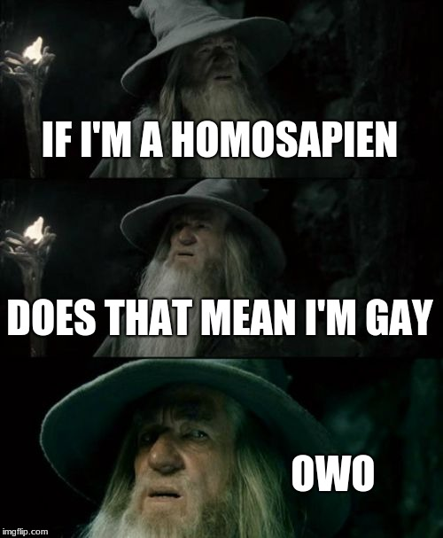 Confused Gandalf | IF I'M A HOMOSAPIEN DOES THAT MEAN I'M GAY OWO | image tagged in memes,confused gandalf | made w/ Imgflip meme maker