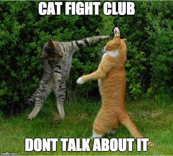 Cat Fight | CAT FIGHT CLUB DONT TALK ABOUT IT | image tagged in cat fight | made w/ Imgflip meme maker
