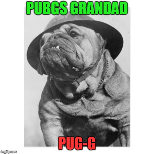PUG-G | PUBGS GRANDAD PUG-G | image tagged in pugs,pug,pubg,video games | made w/ Imgflip meme maker