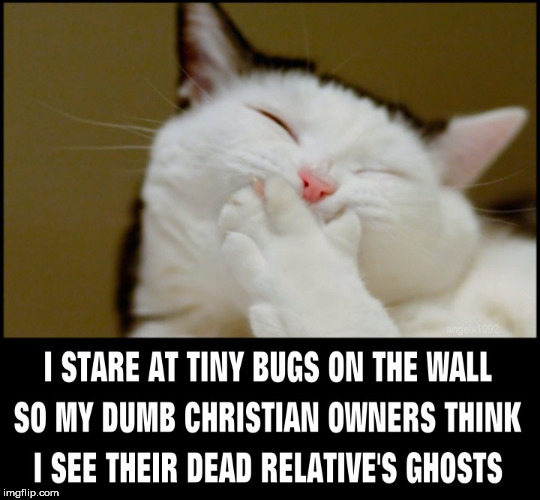 image tagged in cat,cats,bugs,christians,ghosts,spirit | made w/ Imgflip meme maker