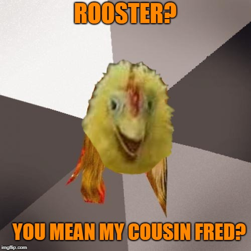 ROOSTER? YOU MEAN MY COUSIN FRED? | made w/ Imgflip meme maker