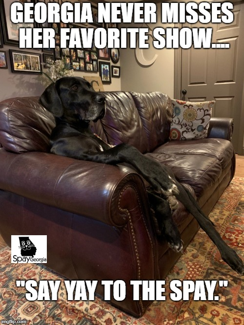 "GEORGIA NEVER MISSES HER FAVORITE SHOW.... ""SAY YAY TO THE SPAY."" 