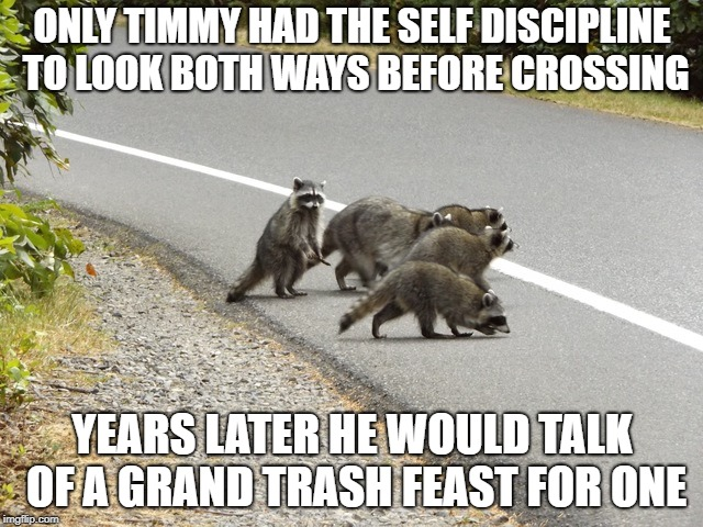 Dinner for one | ONLY TIMMY HAD THE SELF DISCIPLINE TO LOOK BOTH WAYS BEFORE CROSSING YEARS LATER HE WOULD TALK OF A GRAND TRASH FEAST FOR ONE | image tagged in funny,raccoon | made w/ Imgflip meme maker