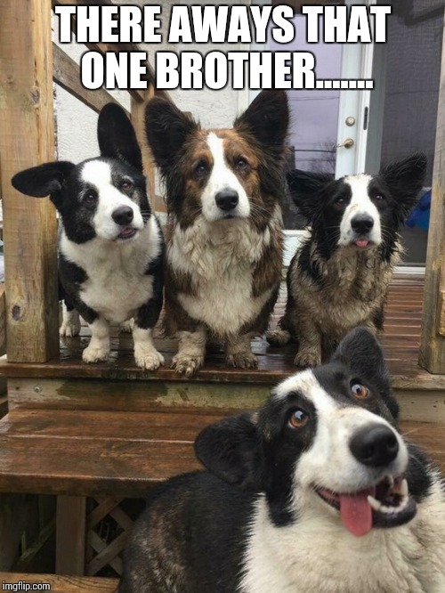 THERE AWAYS THAT ONE BROTHER....... | image tagged in derp dog | made w/ Imgflip meme maker