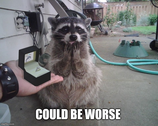 Raccoon Proposal  | COULD BE WORSE | image tagged in raccoon proposal | made w/ Imgflip meme maker