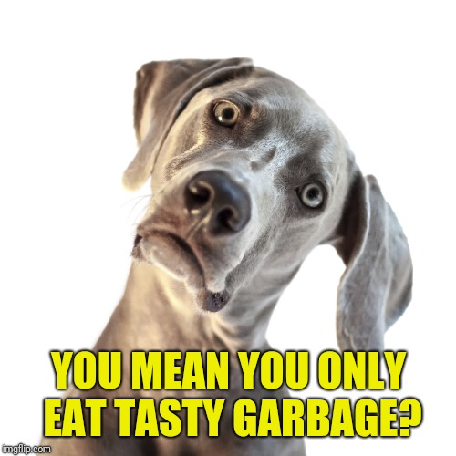confused dog | YOU MEAN YOU ONLY EAT TASTY GARBAGE? | image tagged in confused dog | made w/ Imgflip meme maker