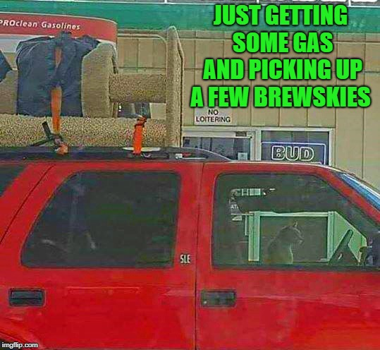 took this photo yesterday :-)  | JUST GETTING SOME GAS AND PICKING UP A FEW BREWSKIES | image tagged in cat driving,gas station | made w/ Imgflip meme maker