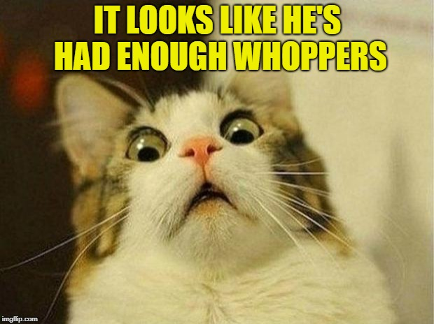 Scared Cat Meme | IT LOOKS LIKE HE'S HAD ENOUGH WHOPPERS | image tagged in memes,scared cat | made w/ Imgflip meme maker