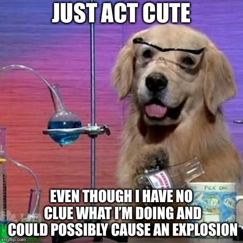 I Have No Idea What I Am Doing Dog | JUST ACT CUTE EVEN THOUGH I HAVE NO CLUE WHAT I'M DOING AND COULD POSSIBLY CAUSE AN EXPLOSION | image tagged in memes,i have no idea what i am doing dog | made w/ Imgflip meme maker