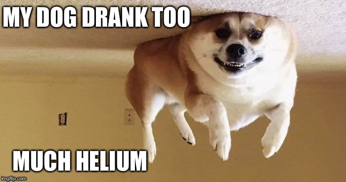 Helium | MY DOG DRANK TOO MUCH HELIUM | image tagged in lol,dog,funny,helium | made w/ Imgflip meme maker