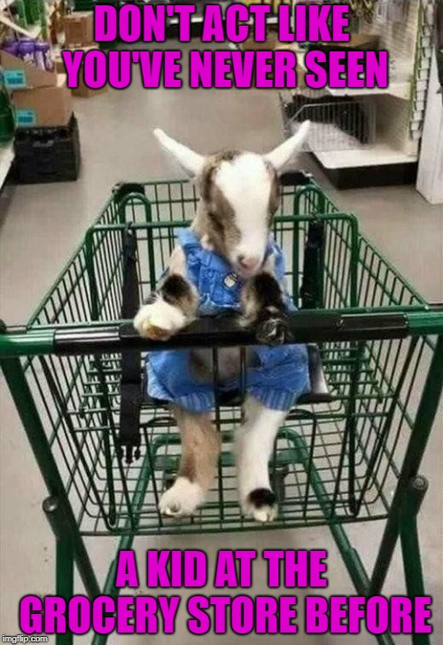 Technically there's no rules broken here. | DON'T ACT LIKE YOU'VE NEVER SEEN A KID AT THE GROCERY STORE BEFORE | image tagged in kid in grocery cart,memes,kid,funny,goats,animals | made w/ Imgflip meme maker