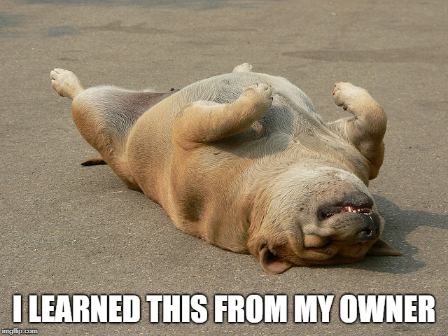 Dog Playing Dead | I LEARNED THIS FROM MY OWNER | image tagged in dog playing dead | made w/ Imgflip meme maker