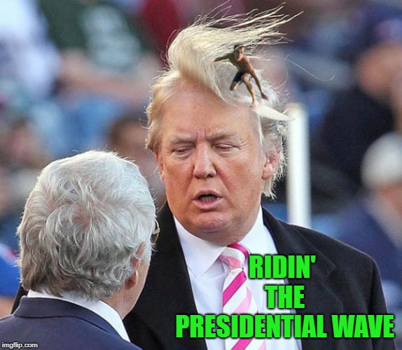 Don't mind me...I'm just along for the ride!!! | RIDIN' THE PRESIDENTIAL WAVE | image tagged in trump hair surfer,memes,trump,funny,bad rug,toupee | made w/ Imgflip meme maker