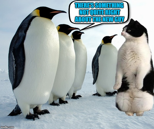 When you never fit in | THERE'S SOMETHING NOT QUITE RIGHT ABOUT THE NEW GUY | image tagged in funny memes,animals,penguins,cat,meme | made w/ Imgflip meme maker