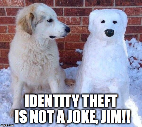 IDENTITY THEFT IS NOT A JOKE, JIM!! | image tagged in dogs,snow,the office,one does not simply,first world problems | made w/ Imgflip meme maker