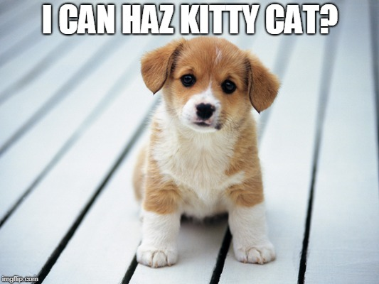 Cute puppy 1 | I CAN HAZ KITTY CAT? | image tagged in cute puppy 1 | made w/ Imgflip meme maker