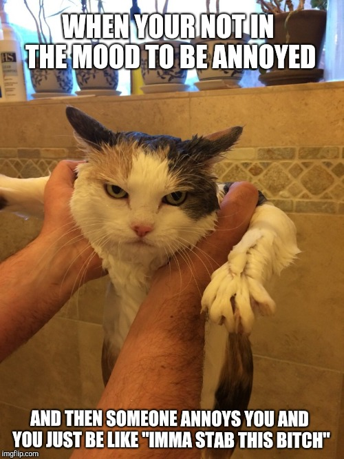 "Leave meh alone! | WHEN YOUR NOT IN THE MOOD TO BE ANNOYED AND THEN SOMEONE ANNOYS YOU AND YOU JUST BE LIKE ""IMMA STAB THIS B**CH"" 