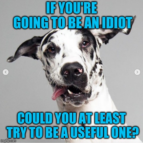 Some days you just have to wonder, don't you? | IF YOU'RE GOING TO BE AN IDIOT COULD YOU AT LEAST TRY TO BE A USEFUL ONE? | image tagged in useful idiots,dog | made w/ Imgflip meme maker