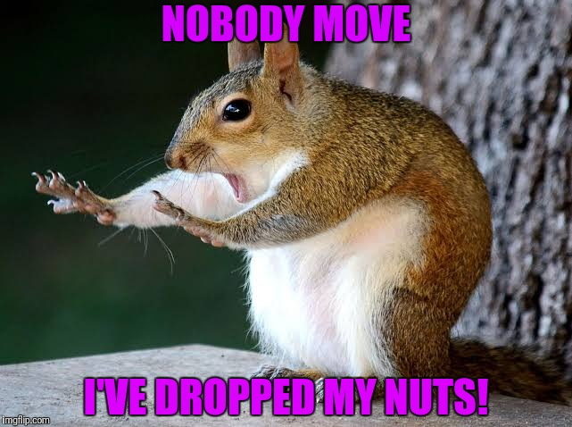 I've dropped my nuts! | NOBODY MOVE I'VE DROPPED MY NUTS! | image tagged in funny squirrel,dropped my nuts,nobody move | made w/ Imgflip meme maker
