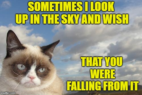Thinking of you | SOMETIMES I LOOK UP IN THE SKY AND WISH THAT YOU WERE FALLING FROM IT | image tagged in memes,grumpy cat sky,grumpy cat,cats,funny,wishing | made w/ Imgflip meme maker
