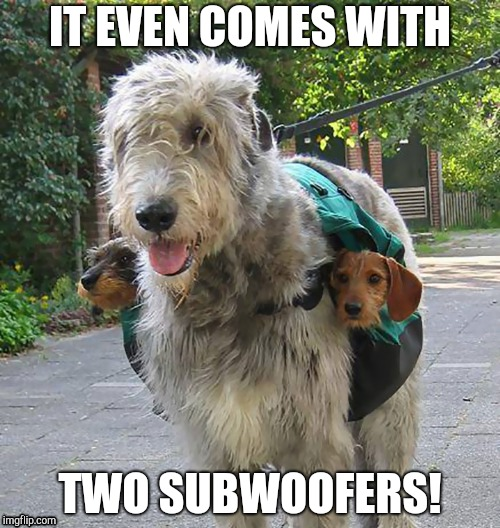 Discount | IT EVEN COMES WITH TWO SUBWOOFERS! | image tagged in irish,dogs | made w/ Imgflip meme maker