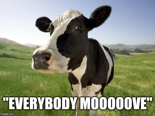 "cow | ""EVERYBODY MOOOOOVE"" 