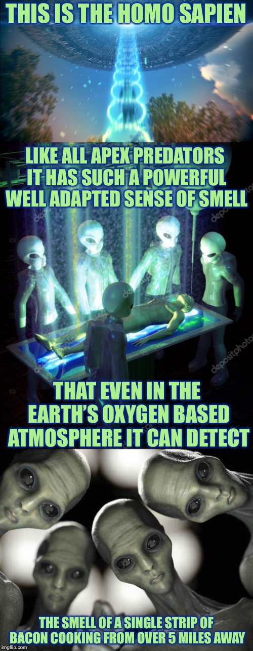 THIS IS THE HOMO SAPIEN THE SMELL OF A SINGLE STRIP OF BACON COOKING FROM OVER 5 MILES AWAY LIKE ALL APEX PREDATORS IT HAS SUCH A POWERFUL W | image tagged in alien abduction,memes,funny,so true memes | made w/ Imgflip meme maker