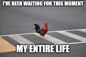 I don't know why , but I know where | I'VE BEEN WAITING FOR THIS MOMENT MY ENTIRE LIFE | image tagged in chicken cross road,old joke,tacos are the answer,happy dance,am i the only one around here | made w/ Imgflip meme maker
