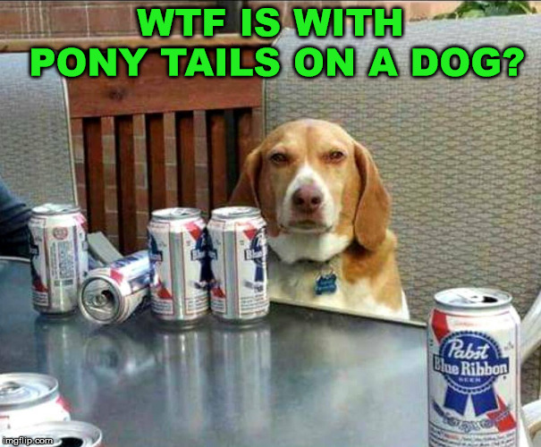 beer dog | WTF IS WITH PONY TAILS ON A DOG? | image tagged in beer dog | made w/ Imgflip meme maker