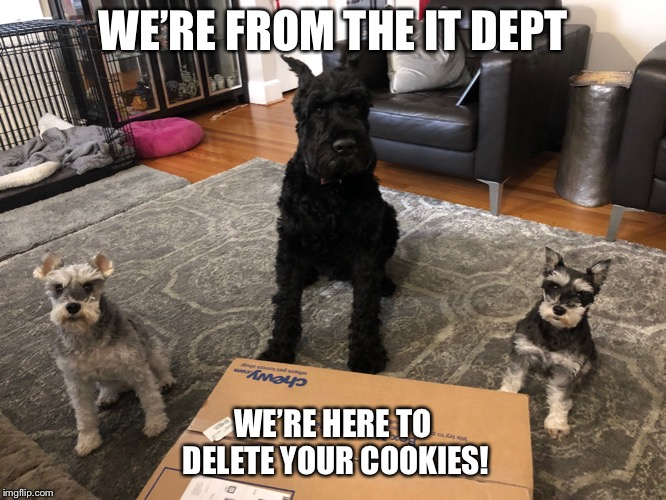 Schnauzer IT Dept | WE'RE FROM THE IT DEPT WE'RE HERE TO DELETE YOUR COOKIES! | image tagged in coogies,dogs,funny dogs,cookies,cookie monster | made w/ Imgflip meme maker