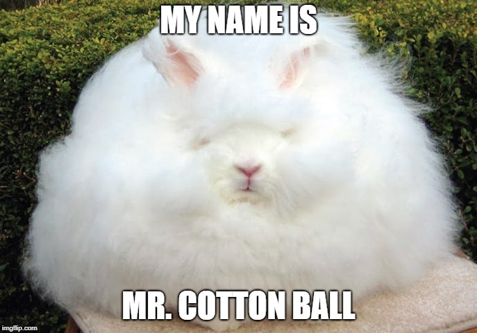 Hairy Bunny | MY NAME IS MR. COTTON BALL | image tagged in cute bunny | made w/ Imgflip meme maker