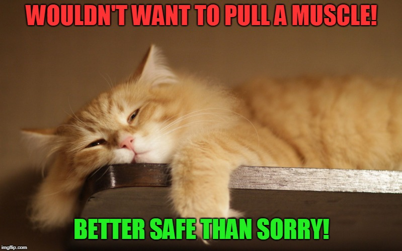 Lazy Cat | WOULDN'T WANT TO PULL A MUSCLE! BETTER SAFE THAN SORRY! | image tagged in lazy cat | made w/ Imgflip meme maker
