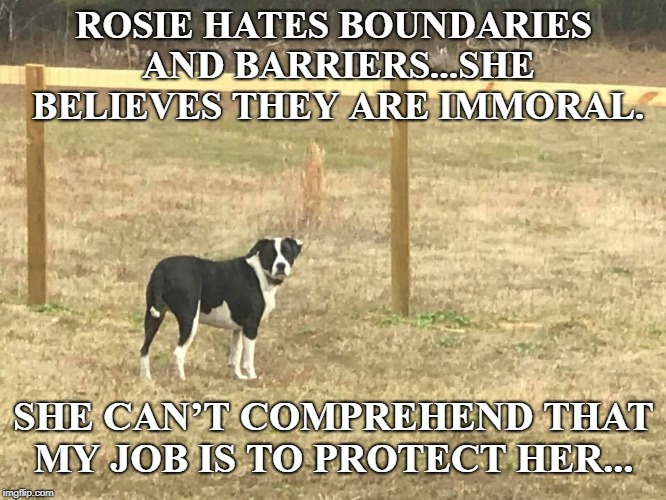 Why doesn't she understand? Could it be her small brain?  | ROSIE HATES BOUNDARIES AND BARRIERS...SHE BELIEVES THEY ARE IMMORAL. SHE CAN'T COMPREHEND THAT MY JOB IS TO PROTECT HER... | image tagged in border wall,build a wall,government shutdown,memes,dogs,dog | made w/ Imgflip meme maker