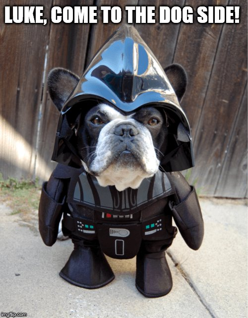 Too Cute! | LUKE, COME TO THE DOG SIDE! | image tagged in dog,darth vader - come to the dark side,darth vader,star wars,cute puppies,cute | made w/ Imgflip meme maker