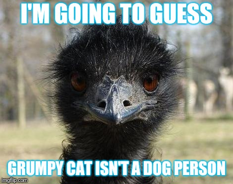 Bad News Emu | I'M GOING TO GUESS GRUMPY CAT ISN'T A DOG PERSON | image tagged in bad news emu | made w/ Imgflip meme maker