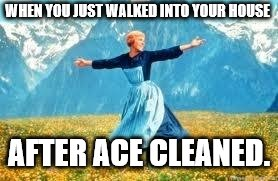 Look At All These | WHEN YOU JUST WALKED INTO YOUR HOUSE AFTER ACE CLEANED. | image tagged in memes,look at all these | made w/ Imgflip meme maker