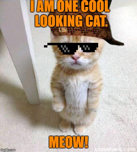 """I am one cool looking cat!"" 