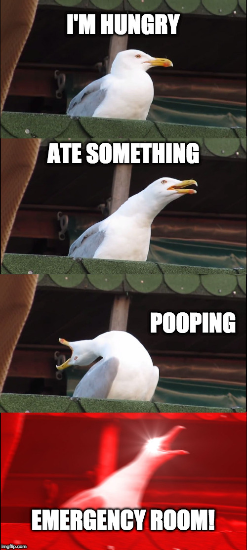 Inhaling Seagull Meme | I'M HUNGRY ATE SOMETHING POOPING EMERGENCY ROOM! | image tagged in memes,inhaling seagull | made w/ Imgflip meme maker