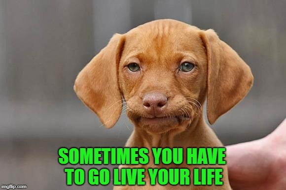 SOMETIMES YOU HAVE TO GO LIVE YOUR LIFE | made w/ Imgflip meme maker