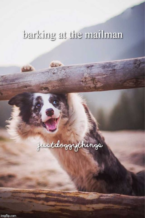 Justdoggythings | image tagged in feels good,justdoggythings | made w/ Imgflip meme maker