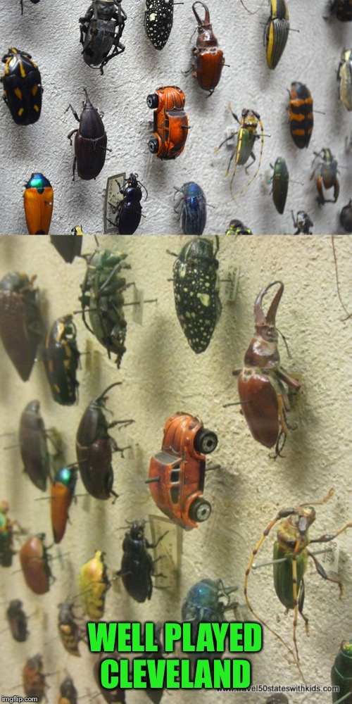 Spotted in the entomology exhibit-beep-beep | WELL PLAYED CLEVELAND | image tagged in bugs,beetles,cleveland museum | made w/ Imgflip meme maker