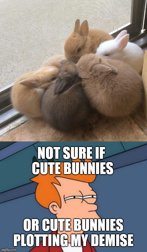 NOT SURE IF CUTE BUNNIES OR CUTE BUNNIES PLOTTING MY DEMISE | image tagged in memes,futurama fry | made w/ Imgflip meme maker